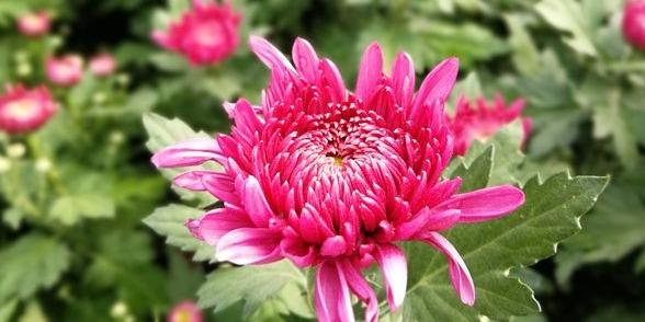 這是深秋的廖河公園,還有你心心念的菊花