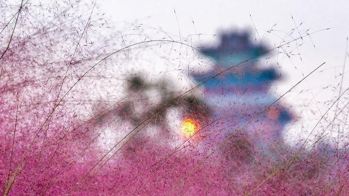 粉色花海''如梦如幻''   嘉祥这个地方美翻了
