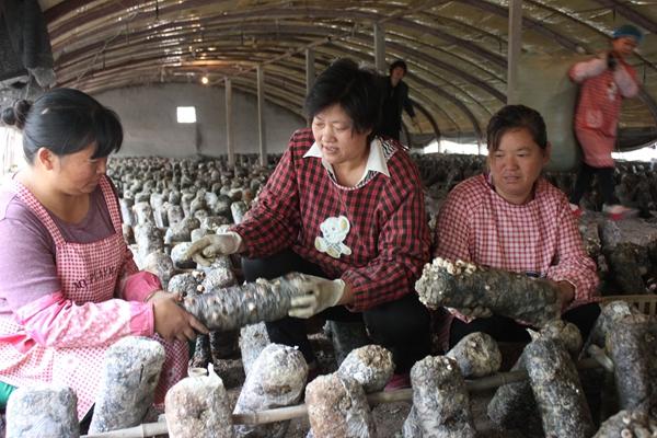 梁山:小香菇大產業 帶動農民脫貧致富奔小康(圖)
