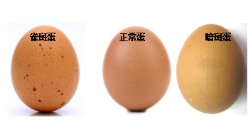 食用长斑鸡蛋会引起食物中毒?专家称:NO!