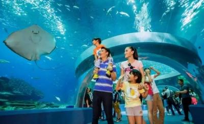 重磅!白鲸、海豚...游进济宁 投资35亿海洋世界落户曲阜