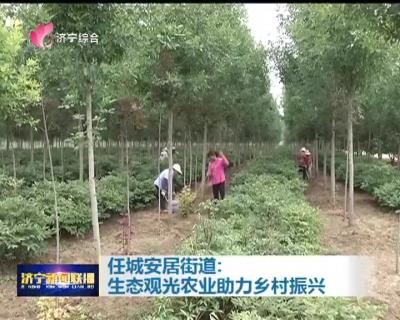 任城安居街道:生态观光农业助力乡村振兴