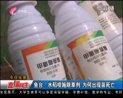 鱼台:水稻喷施除草剂 为何出现苗死亡