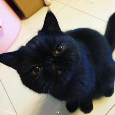 被曝与鹿晗分手?关晓彤疑否认:黑猫问号脸