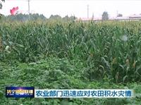 pt电子平台市农业部门迅速开展救灾工作 尽快恢复农业生产
