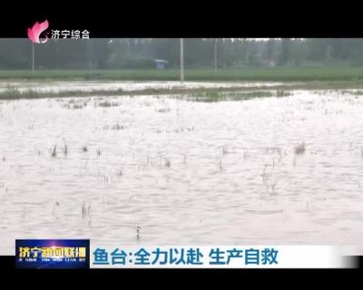 强降雨致26万亩农作物受灾  鱼台全力以赴生产自救
