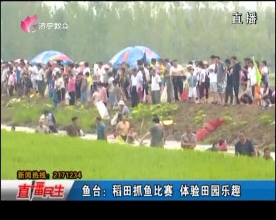 鱼台:稻田抓鱼比赛 体验田园乐趣