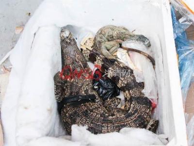 女子网购保健品收到死鳄鱼和蜥蜴 有腐烂气味(图)