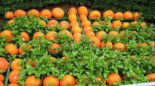 今年山东目标价格保险涉农保额达130亿元