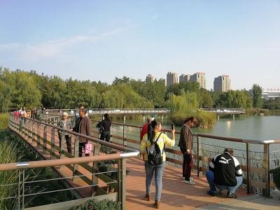 这是深秋的廖河公园,还有你心心念的菊花
