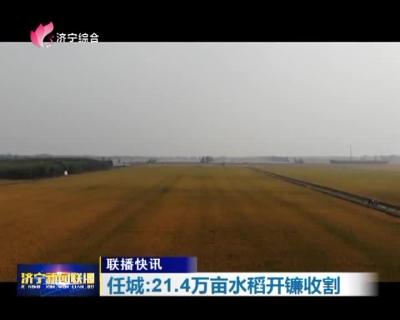 金算盘六合开奖网21.4万亩水稻开镰收割 预计总产量达13万吨