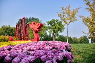 六合图库高新区金秋菊展第九年!一起回忆那些赏花的时光
