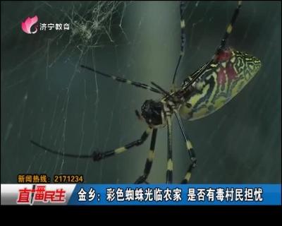 金乡:彩色蜘蛛光临农家 是否有毒村民担忧