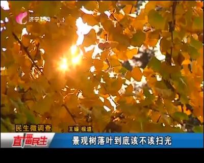 景观树落叶到底该不该扫光