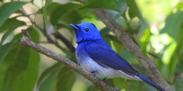 千里追鸟摄影 8年记录600余鸟种 95后U赢电竞小伙的追鸟梦