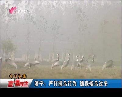 济宁:严打捕鸟行为 确保候鸟过冬