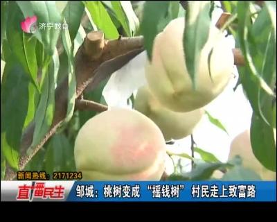 """邹城:桃树变成""""摇钱树"""" 村民走上致富路"""