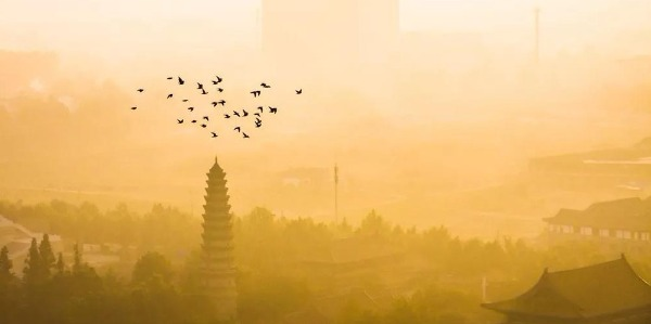 汶上:秋冬晨雾,景色怡人