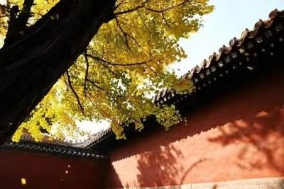 """初冬,来古城曲阜寻觅最美的""""秋"""""""