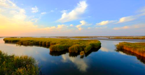 乐虎游戏官网5处湿地上榜山东省最美湿地,数量全省第一