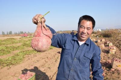 泗水地瓜上榜第五批山东省知名农产品区域公用品牌