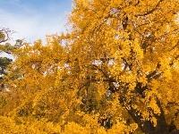 入冬了,孟庙孟府却还在秋日美景中等着与你的一场约会