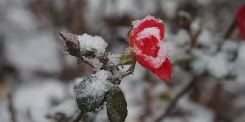 兴隆雨落初雪时,盼得佳人共白头