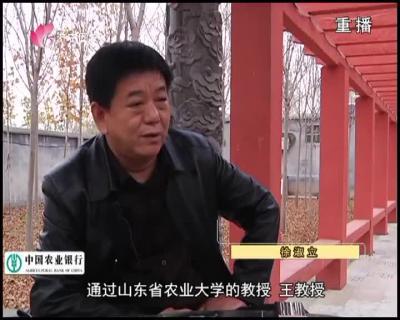 """废旧窑厂""""养猪记"""""""