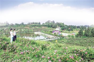 太白湖新区一亩农庄现代化田园综合体项目签约