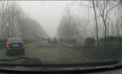 大树横在路上阻碍交通  微山交警及时清理保畅