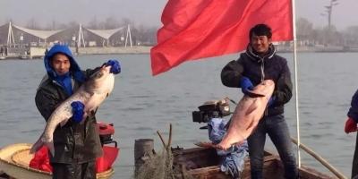 2019年元旦,太白湖捕鱼节等你来!
