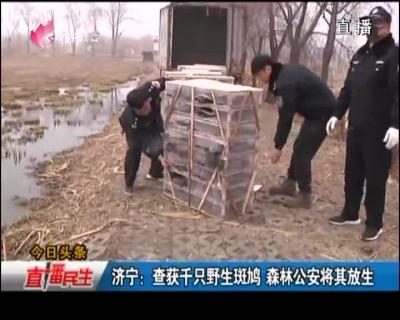 济宁:查获千只野生斑鸠 森林公安将其放生