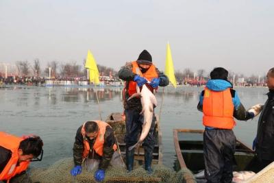 太白湖捕鱼节新年开网 头鱼重达81.8斤!