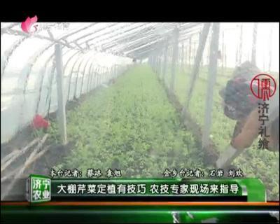 做什么赚钱快农业  —  20190111