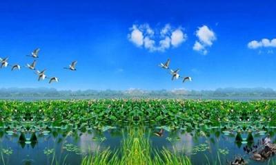 微山湖水越來越清 最好的觀鳥地就在家門口