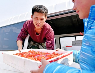 """新春新事 村里有个草莓学院 专家定期来""""把脉"""""""