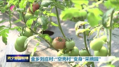 """金乡刘庄村:""""空壳村""""变身""""采摘园"""""""