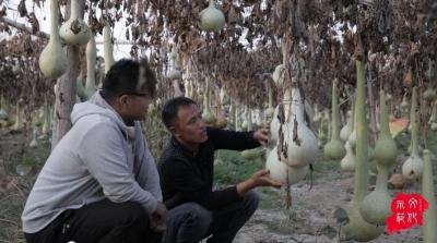 文化传播微视频第三十八辑——绾结葫芦