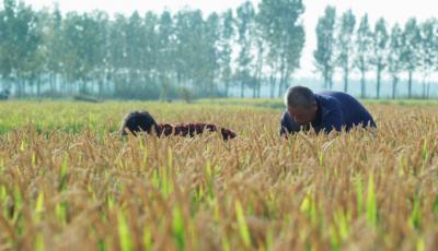 文化传播微视频第二十六辑——稻