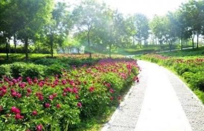 阳春三月来临,汶上莲花湖湿地景区邀您来赏花