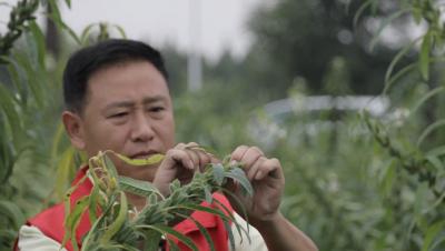 文化传播微视频第二十一辑——御桥香油