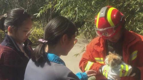 暖心!邹城消防员爬树营救小猫
