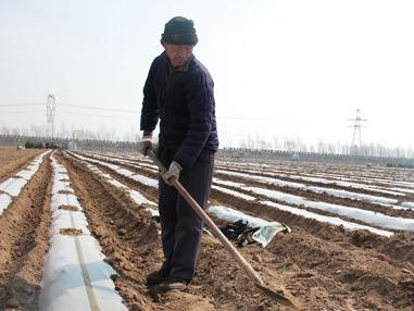 汶上古城村传统农业注入创新元素 助推乡村振兴