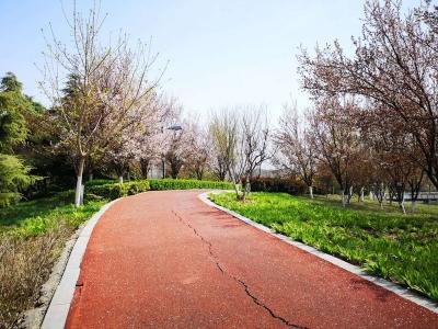 相约蓼河公园最美跑道,来一场春天的奔跑