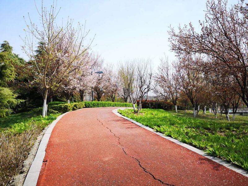 相約蓼河公園最美跑道,來一場春天的奔跑