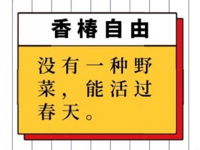 """50元一斤!济宁人炫富新标准:""""香椿自由"""""""