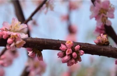 这个周末,济宁市博物馆与您相约 共赏诗意春天