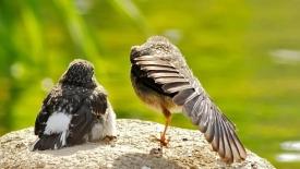 《春天的小鸟》