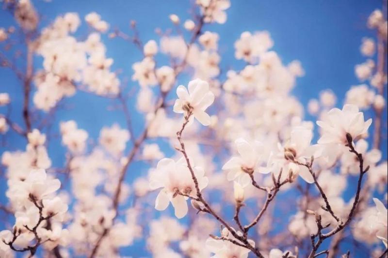 阳春三月,快来曲园赏花吧