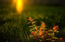散文《磨砺生命的光芒》